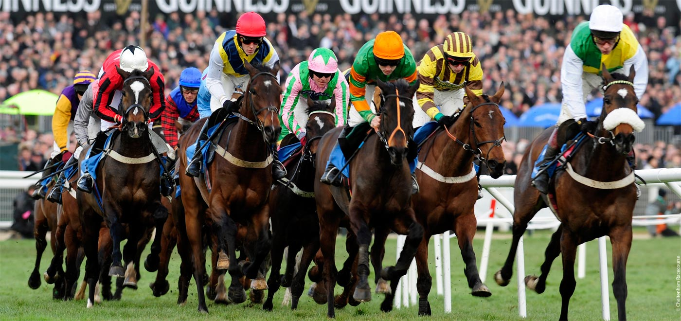 CHELTENHAM FESTIVAL AND GOLD CUP